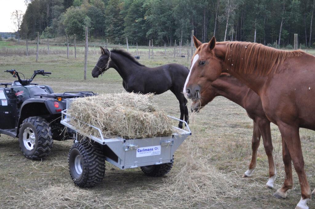 Gårdsvagn Exklusiv med hö bredvid föl